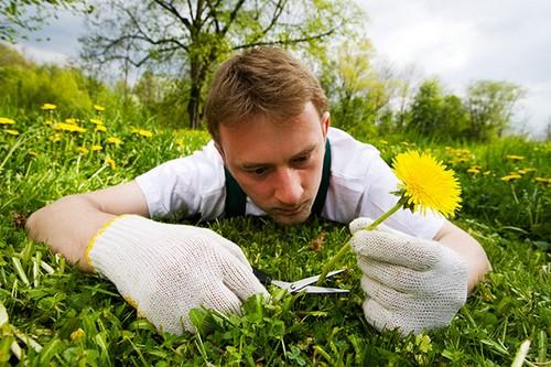 Польза соды в огороде: эффективные и действенные способы применения