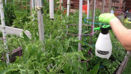 Опрыскивание помидоров