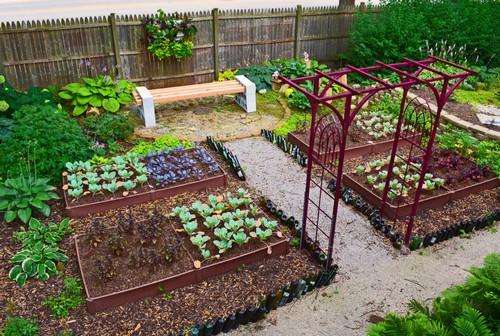 Применяем соду на огороде